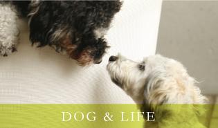 Dog & Life