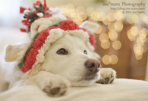 Happy Christmas ☆ with Dogs